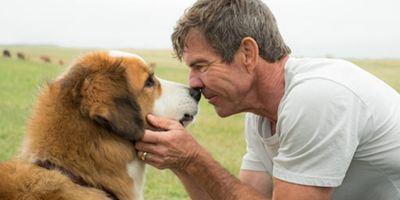 Mes vies de chien : appel au boycott après une video choquante