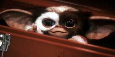 Gremlins : le nouveau film est toujours d'actualité, et ce sera un reboot !