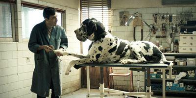 Dogman : retour sur le terrifiant fait divers à l'origine du film
