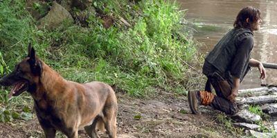 The Walking Dead: les fans lancent une pétition pour empêcher les scénaristes de tuer le chien de Daryl