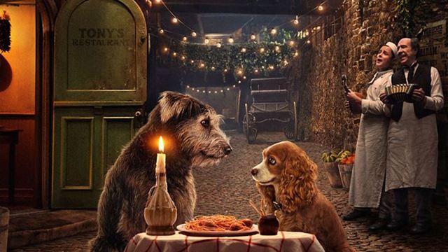 Lady et Clochard, Croc Blanc, Benji... 17 chiens qu'on adore à retrouver sur Disney +