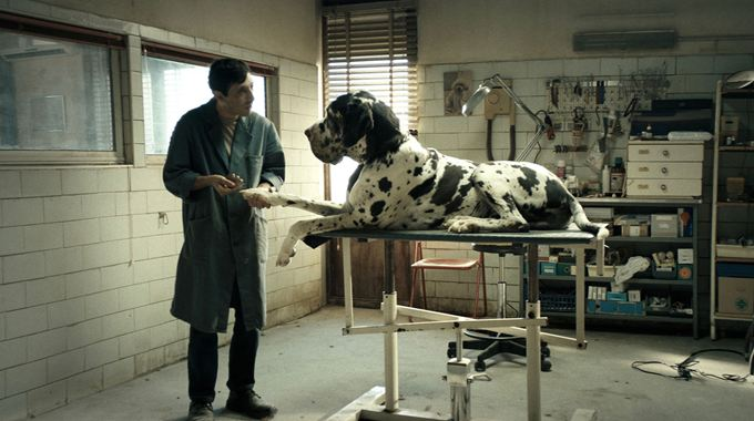 Photo 1 pour Dogman