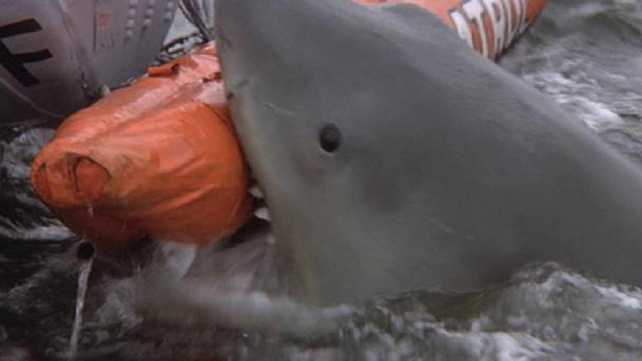 Les Dents de la mer 2 sur RTL 9 : les requins sont-ils vraiment dangereux pour l'homme ?