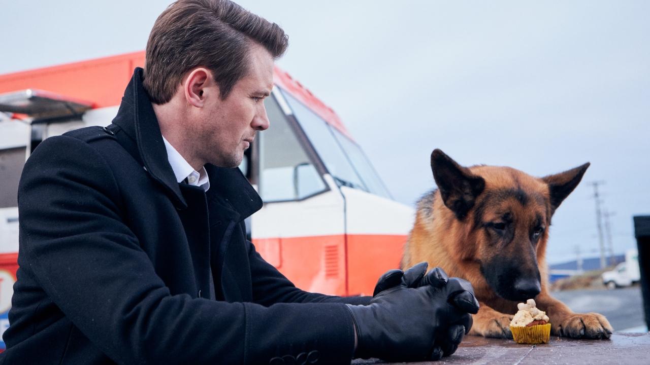 Hudson et Rex (France 3) : que pense la presse du reboot canadien de Rex chien flic ?