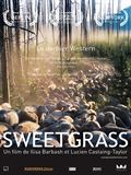 Photo : Sweetgrass