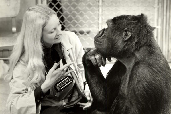 Koko, le gorille qui parle : Photo Barbet Schroeder, Penny Patterson
