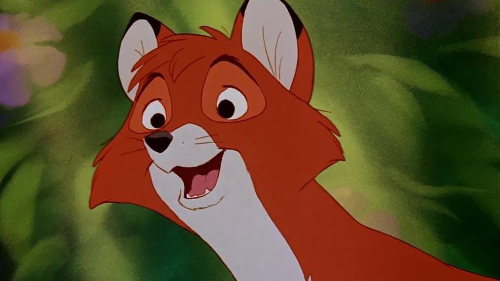 Rox adulte