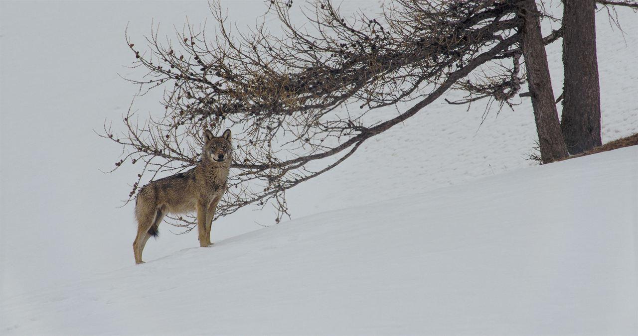 La Vallée des loups : Photo