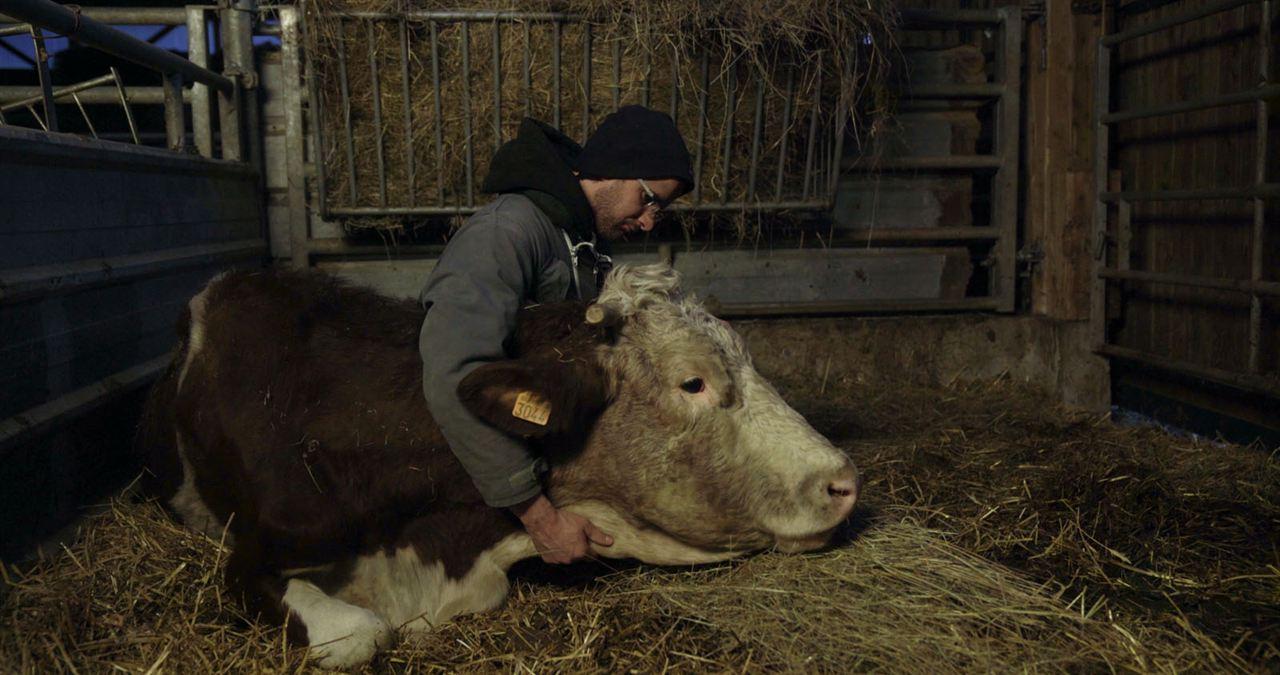 Cyrille, agriculteur, 30 ans, 20 vaches, du lait, du beurre, des dettes : Photo