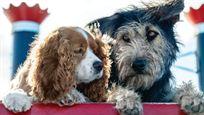La Belle et Le Clochard : première photo du couple canin