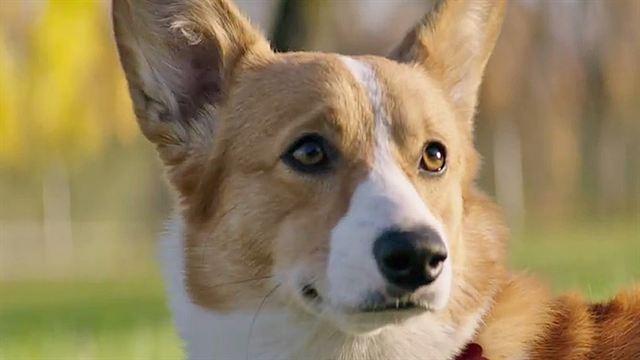 Film mes vies de chien gothicat world gazette - Image bebe chien ...