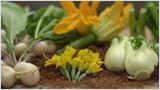 Agitateurs de goût - Les mini-legumes des jardins Saint-Jacques