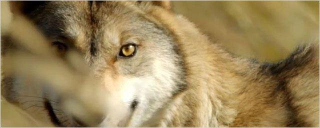 Teaser trailer Le Dernier loup : Jean-Jacques Annaud dans les steppes de Mongolie