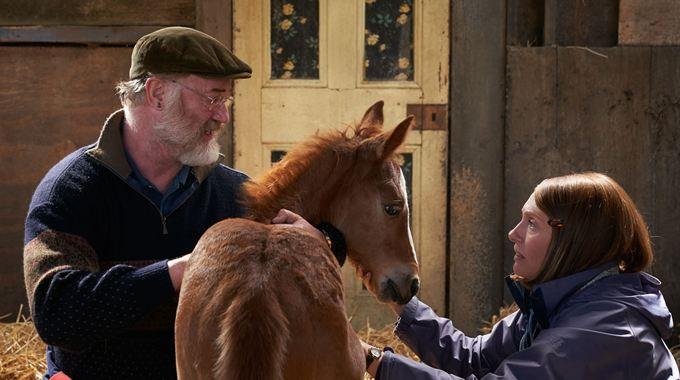 Photo du film Dream Horse